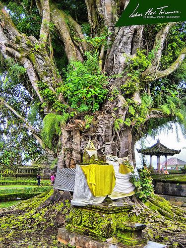 Minta Berkah Kepada Pepohonan, Bebatuan atau yang Sejenisnya